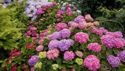 Flowers and Gardens HQ wallpapers Collection 1 22df02108224300
