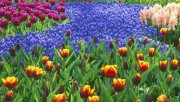 Flowers and Gardens HQ wallpapers Collection 1 3c6e1f108222653