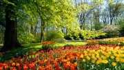 Flowers and Gardens HQ wallpapers Collection 1 64cd72108222590